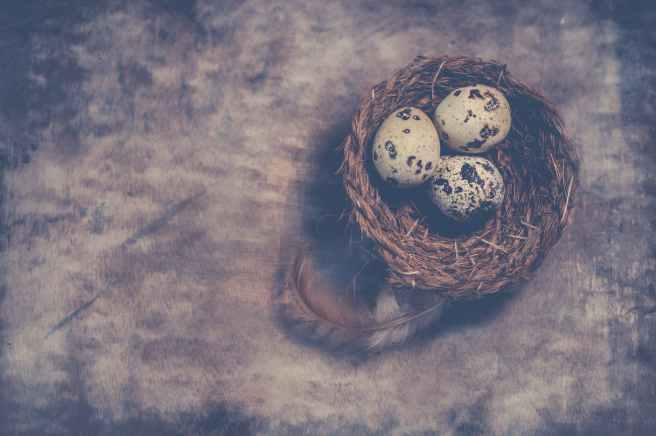 close up photography of quail eggs on nest